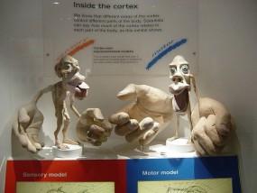 脳の中のこびと=ホムンクルス