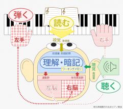 ピアノを弾くと脳で何が起こるかの図
