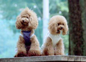 紺と白の服を着た大小の2匹の犬