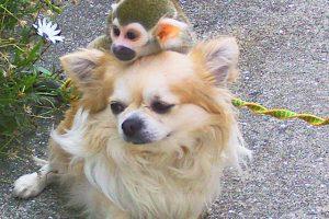 仲の良い猿と犬の写真